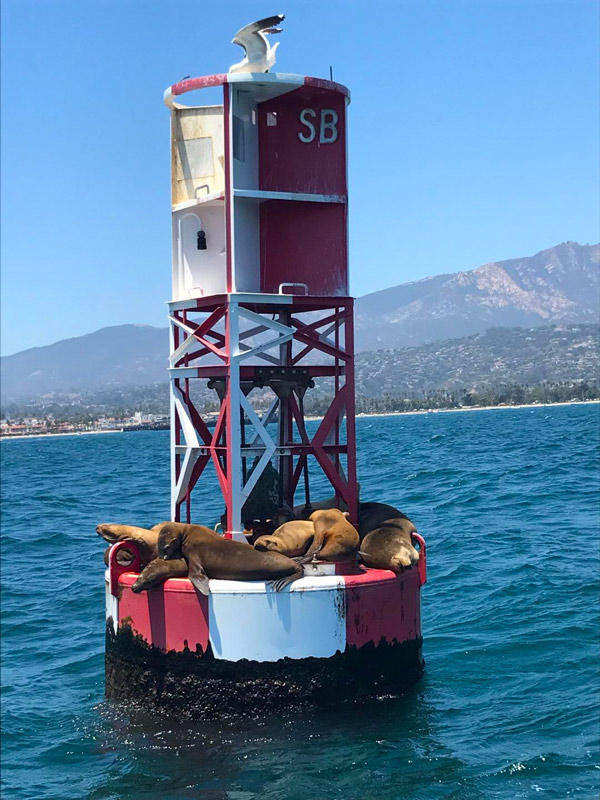 sightseeing by boat in Santa Barbara